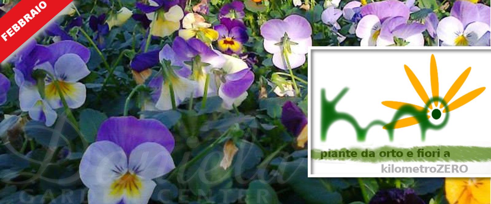 Fiori Da Piantare Nell Orto daniela garden center | un progetto di floricoltura a passo32